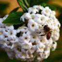 Le api e la biodiversità, dal campo alla tavola